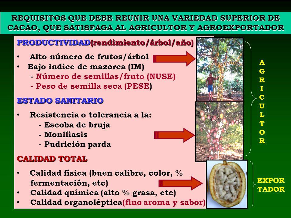 REQUISITOS QUE DEBE REUNIR UNA VARIEDAD SUPERIOR DE CACAO, QUE SATISFAGA AL AGRICULTOR Y AGROEXPORTADOR PRODUCTIVIDAD(rendimiento/árbol/año) Alto núme