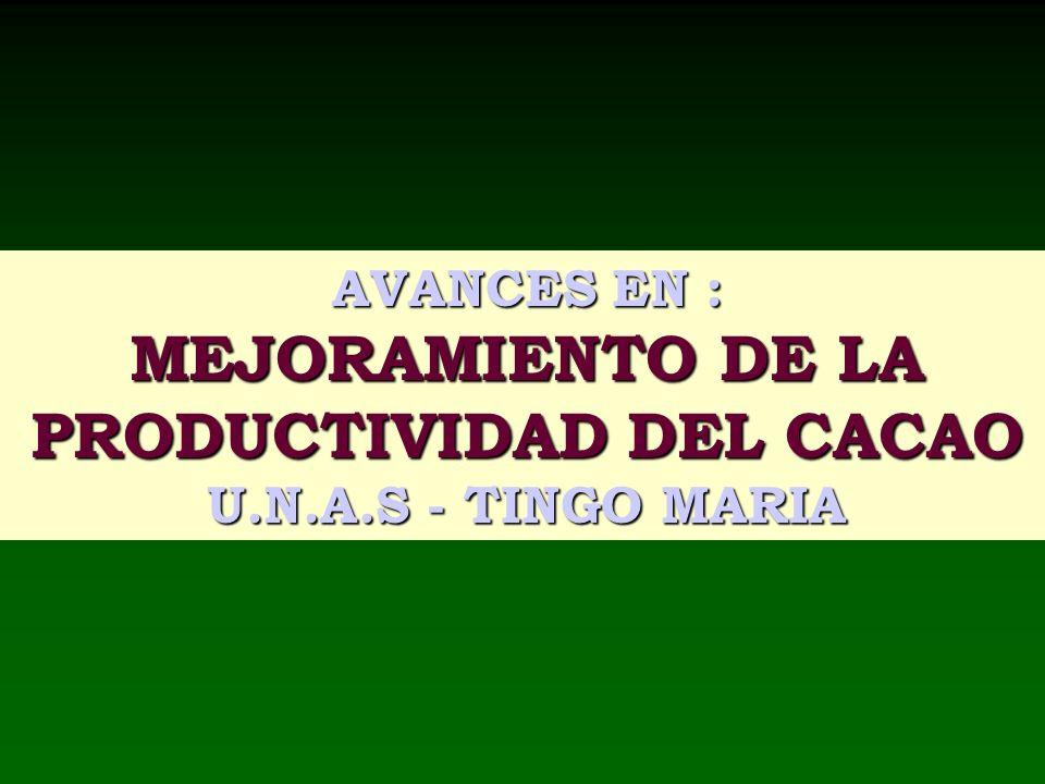 AVANCES EN : MEJORAMIENTO DE LA PRODUCTIVIDAD DEL CACAO U.N.A.S - TINGO MARIA