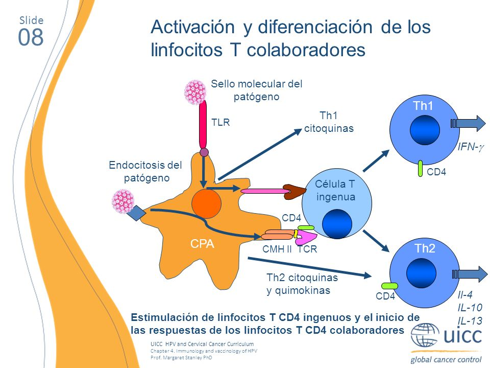 UICC HPV and Cervical Cancer Curriculum Chapter 4. Immunology and vaccinology of HPV Prof. Margaret Stanley PhD 08 Activación y diferenciación de los
