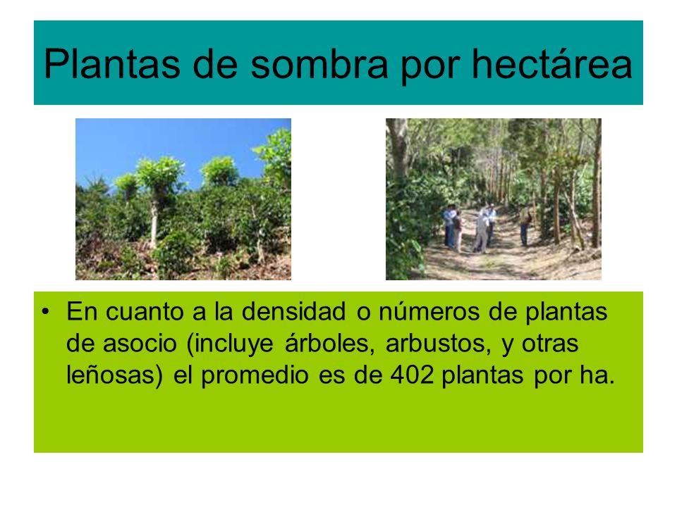 Plantas de sombra por hectárea En cuanto a la densidad o números de plantas de asocio (incluye árboles, arbustos, y otras leñosas) el promedio es de 402 plantas por ha.