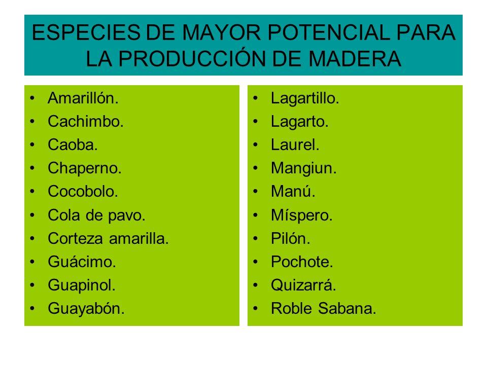 ESPECIES DE MAYOR POTENCIAL PARA LA PRODUCCIÓN DE MADERA Amarillón.