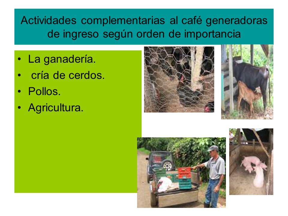 Actividades complementarias al café generadoras de ingreso según orden de importancia La ganadería.