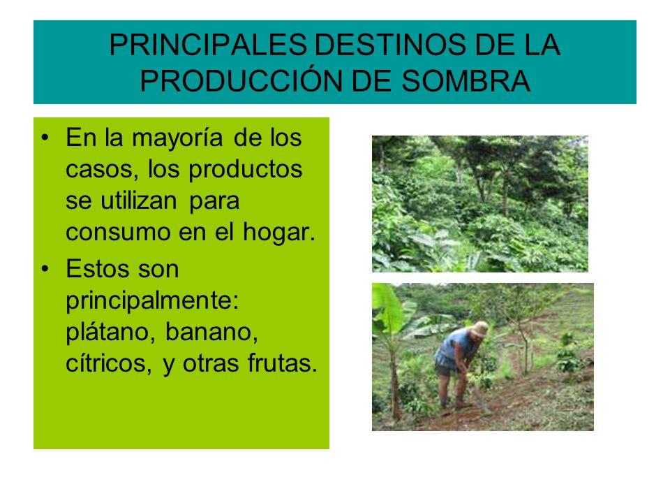 PRINCIPALES DESTINOS DE LA PRODUCCIÓN DE SOMBRA En la mayoría de los casos, los productos se utilizan para consumo en el hogar.