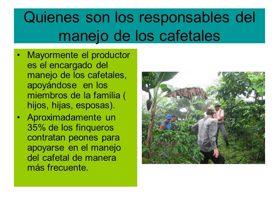 Quienes son los responsables del manejo de los cafetales Mayormente el productor es el encargado del manejo de los cafetales, apoyándose en los miembros de la familia ( hijos, hijas, esposas).