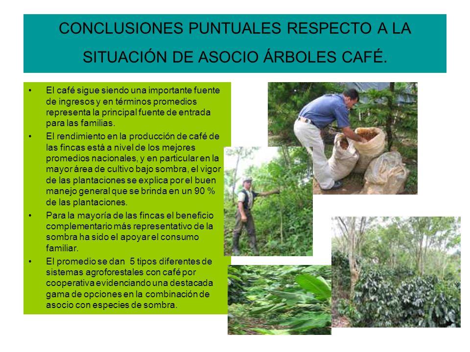 CONCLUSIONES PUNTUALES RESPECTO A LA SITUACIÓN DE ASOCIO ÁRBOLES CAFÉ.