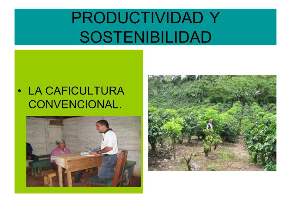 PRODUCTIVIDAD Y SOSTENIBILIDAD LA CAFICULTURA CONVENCIONAL.
