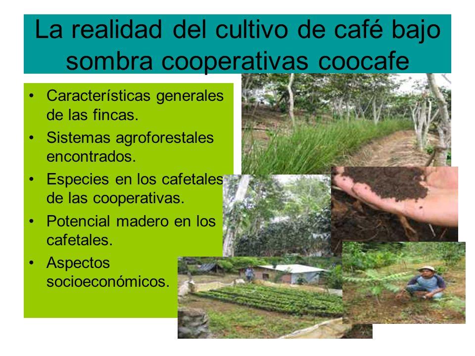 LA REALIDAD DEL CULTIVO DE CAFÉ BAJO SOMBRA Características generales de las fincas: 1-El tamaño promedio de las fincas es de 6.8 ha.