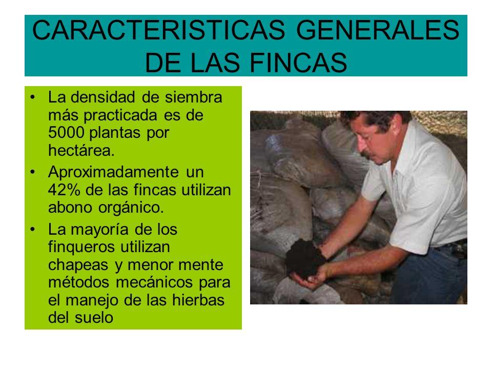 CARACTERISTICAS GENERALES DE LAS FINCAS La densidad de siembra más practicada es de 5000 plantas por hectárea.