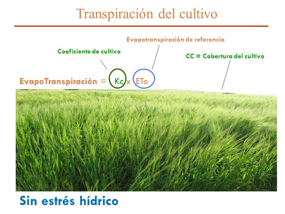 10 Transpiración del cultivo EvapoTranspiración = Kc x ETo Sin estrés hídrico Evapotranspiración de referencia Coeficiente de cultivo = Transpiración