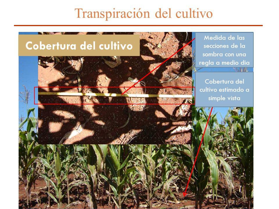 12 Transpiración del cultivo Medida de las secciones de la sombra con una regla a medio día Cobertura del cultivo estimado a simple vista Cobertura de