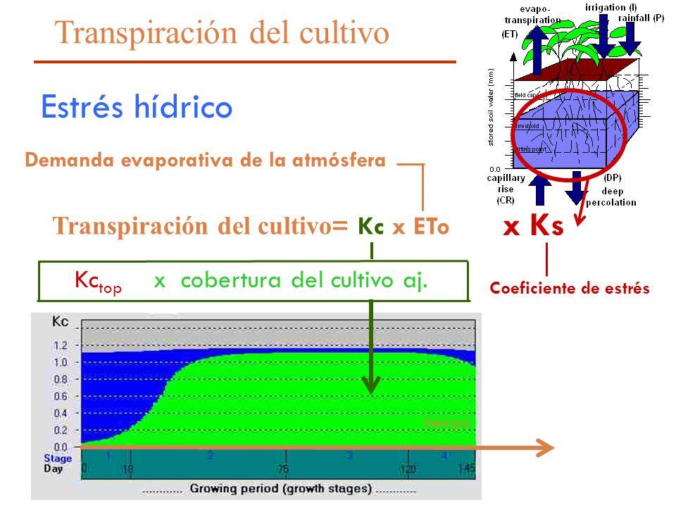 13 Transpiración del cultivo = Kc x ETo x cobertura del cultivo aj. Demanda evaporativa de la atmósfera Kc top tiempo x Ks Estrés hídrico Transpiració