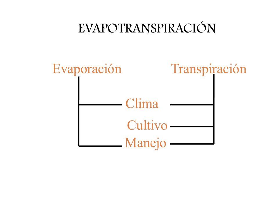 EVAPOTRANSPIRACIÓN Transpiración Clima Evaporación Cultivo Manejo