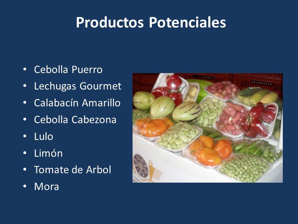 Productos Potenciales Cebolla Puerro Lechugas Gourmet Calabacín Amarillo Cebolla Cabezona Lulo Limón Tomate de Arbol Mora