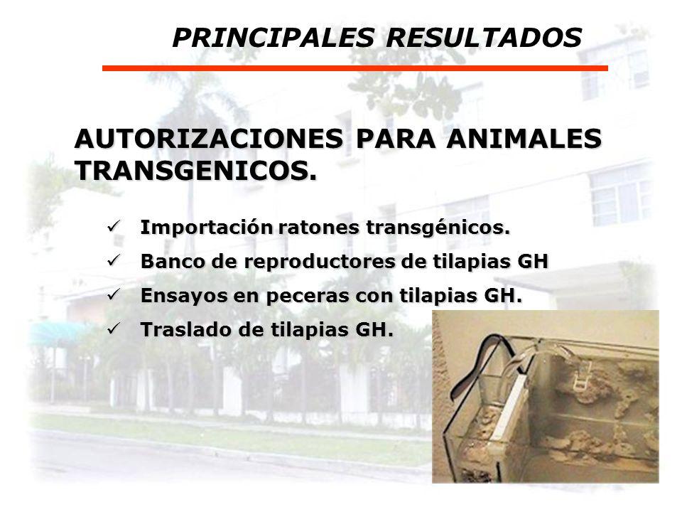 Ensayos de plantas en campo 2002 - 2006 PRINCIPALES RESULTADOS Plátano transgénico RH. Plátano transgénico RH. Papa transgénica TH Papa transgénica TH