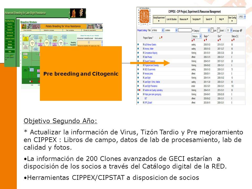 Pre breeding and Citogenic Objetivo Segundo Año: * Actualizar la información de Virus, Tizón Tardio y Pre mejoramiento en CIPPEX : Libros de campo, datos de lab de procesamiento, lab de calidad y fotos.