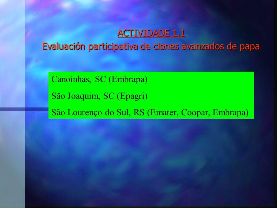 ACTIVIDADE 1.1 Evaluación participativa de clones avanzados de papa Canoinhas, SC (Embrapa) São Joaquim, SC (Epagri) São Lourenço do Sul, RS (Emater, Coopar, Embrapa)
