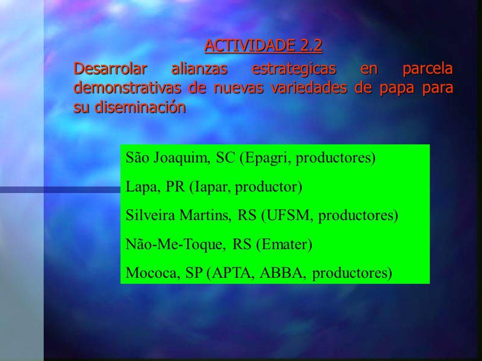 ACTIVIDADE 2.2 Desarrolar alianzas estrategicas en parcela demonstrativas de nuevas variedades de papa para su diseminación São Joaquim, SC (Epagri, productores) Lapa, PR (Iapar, productor) Silveira Martins, RS (UFSM, productores) Não-Me-Toque, RS (Emater) Mococa, SP (APTA, ABBA, productores)