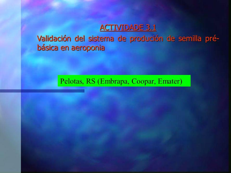ACTIVIDADE 3.1 Validación del sistema de produción de semilla pré- básica en aeroponia Pelotas, RS (Embrapa, Coopar, Emater)