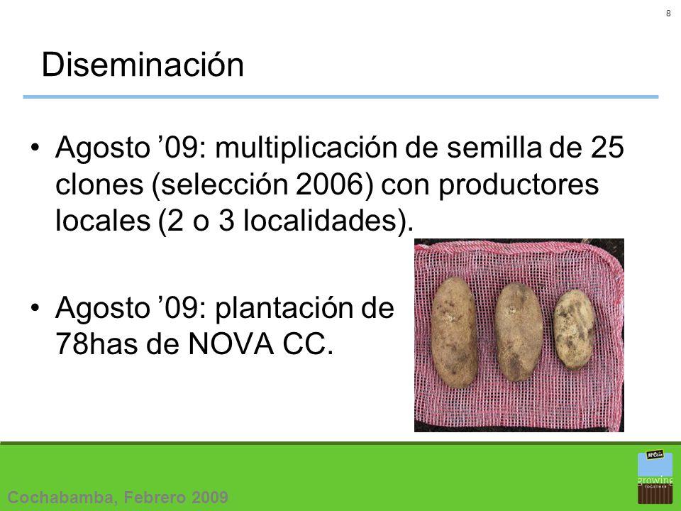 9 Semillas Agosto 08: multiplicación de 25 materiales (Selección 2006, Convenio CIP-McCain).