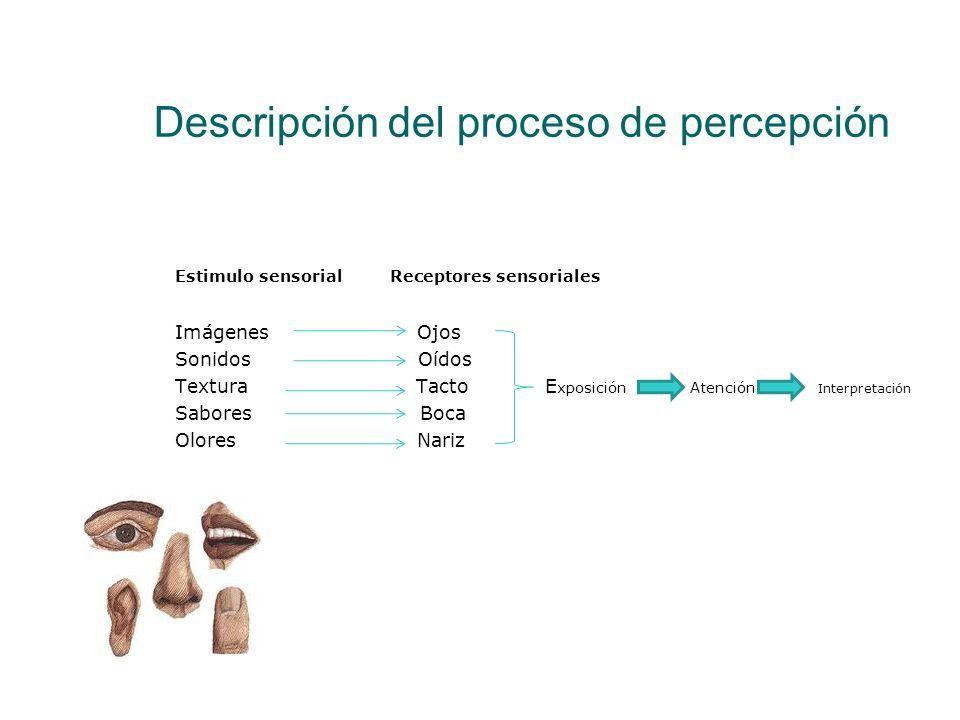 Descripción del proceso de percepción Estimulo sensorial Receptores sensoriales Imágenes Ojos Sonidos Oídos Textura Tacto E xposición Atención Interpr