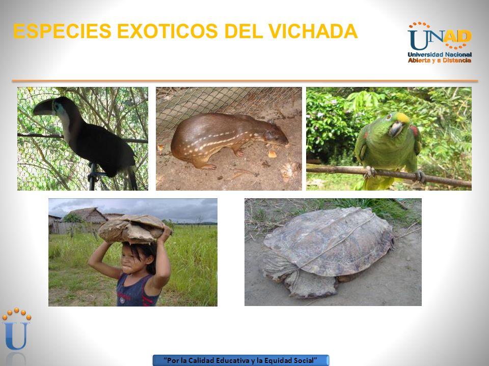 Por la Calidad Educativa y la Equidad Social RECORRIENDO EL VICHADA Playa Turística sobre el río Orinoco Cerro de la Bandera, icono de la Municipio de