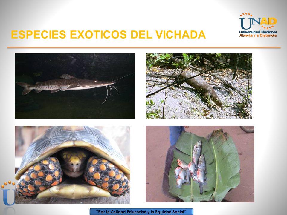 Por la Calidad Educativa y la Equidad Social ESPECIES EXOTICOS DEL VICHADA