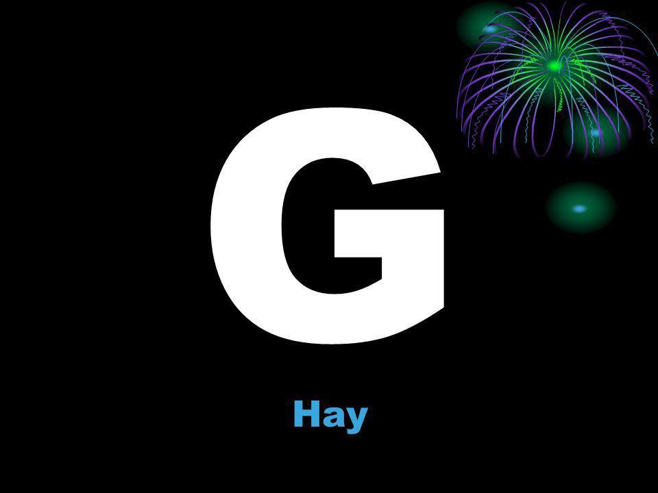 G Hay
