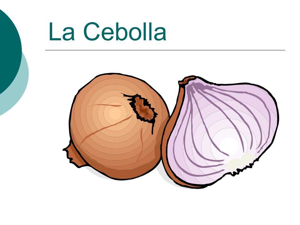 La Cebolla