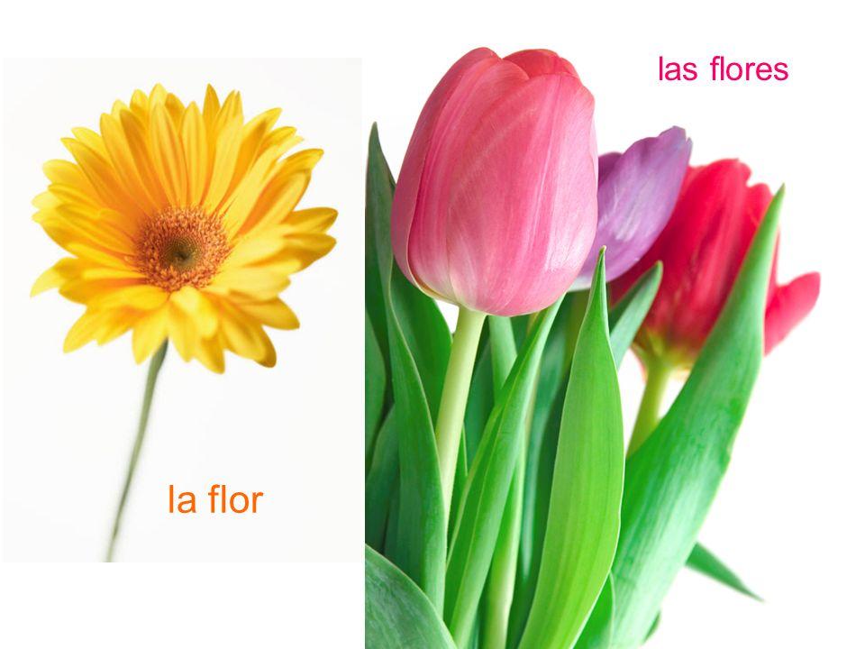 la flor las flores
