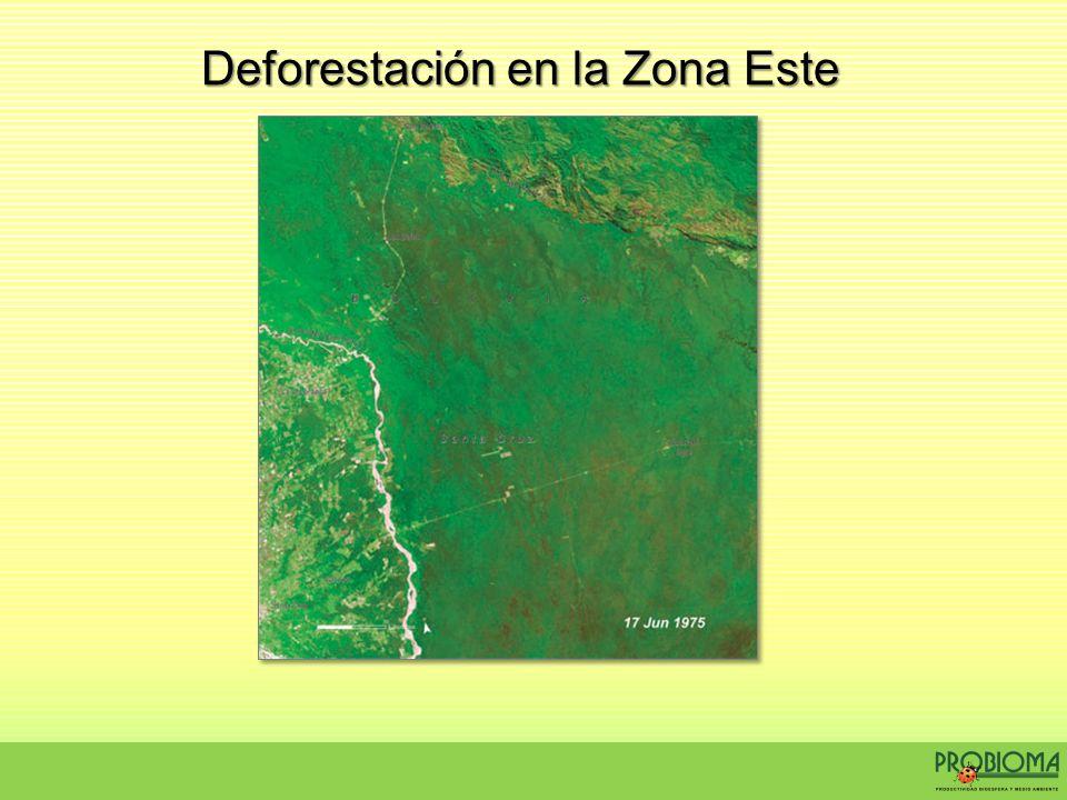 Deforestación en la Zona Este
