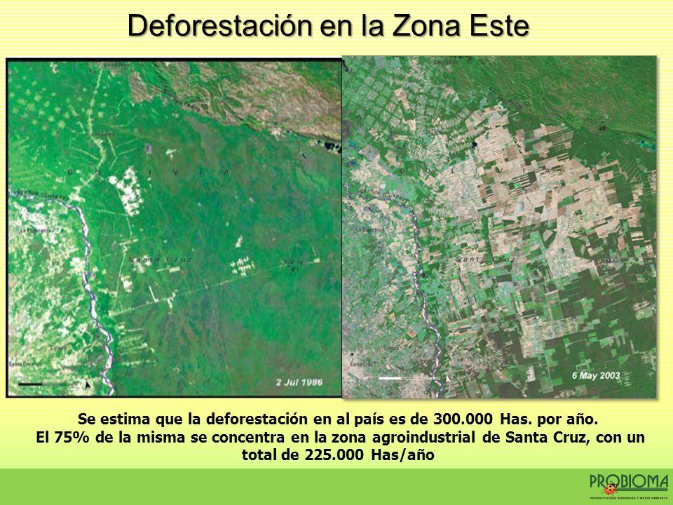 Se estima que la deforestación en al país es de 300.000 Has. por año. El 75% de la misma se concentra en la zona agroindustrial de Santa Cruz, con un