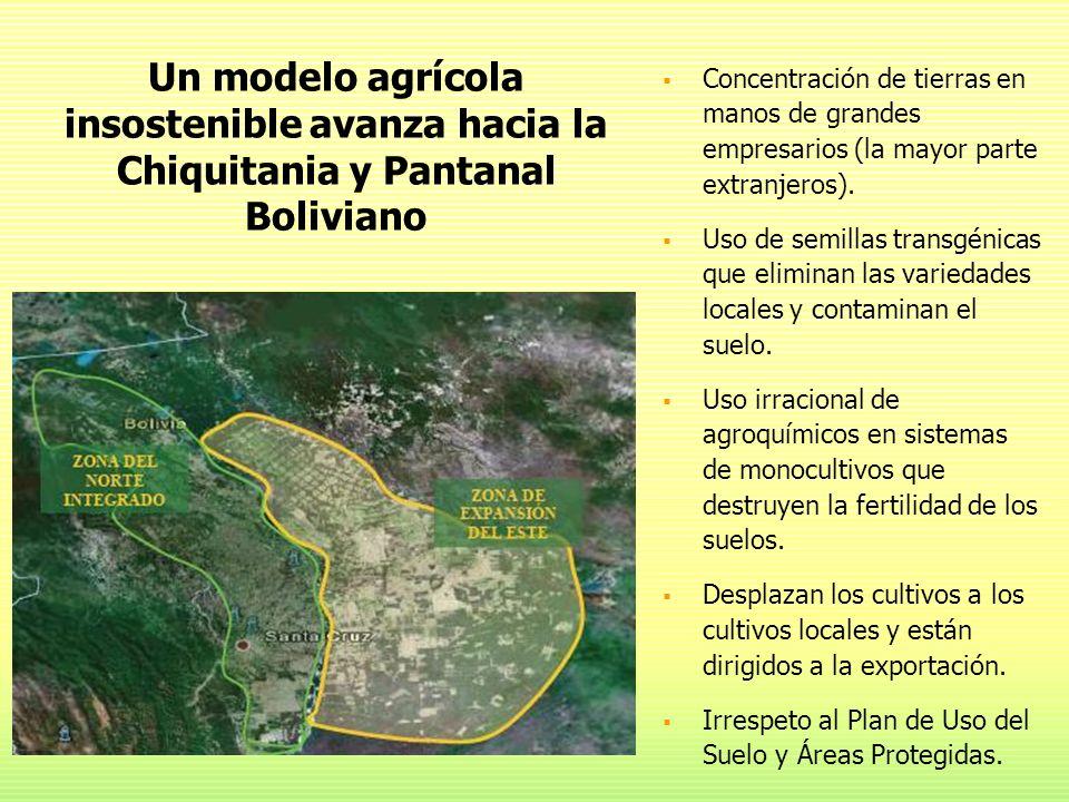 Concentración de tierras en manos de grandes empresarios (la mayor parte extranjeros). Uso de semillas transgénicas que eliminan las variedades locale