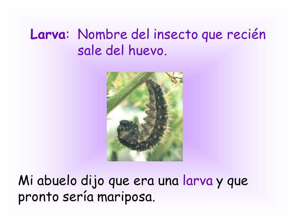 Larva:Nombre del insecto que recién sale del huevo. Mi abuelo dijo que era una larva y que pronto sería mariposa.