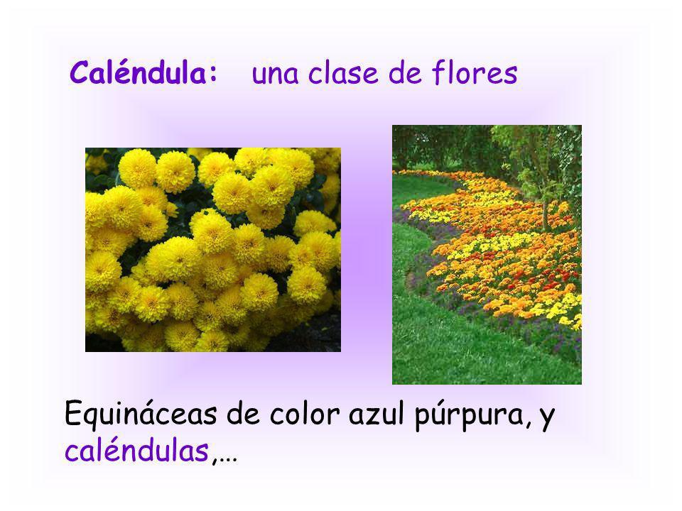 Caléndula:una clase de flores Equináceas de color azul púrpura, y caléndulas,…