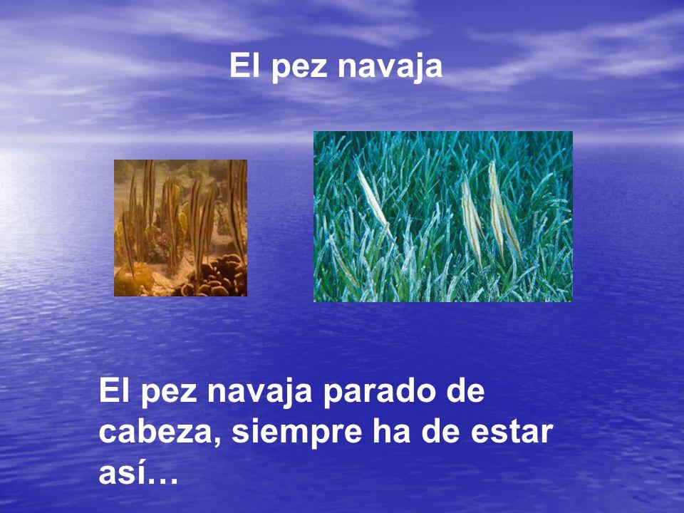 El pez navaja El pez navaja parado de cabeza, siempre ha de estar así…