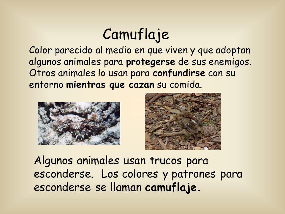 Camuflaje Color parecido al medio en que viven y que adoptan algunos animales para protegerse de sus enemigos. Otros animales lo usan para confundirse