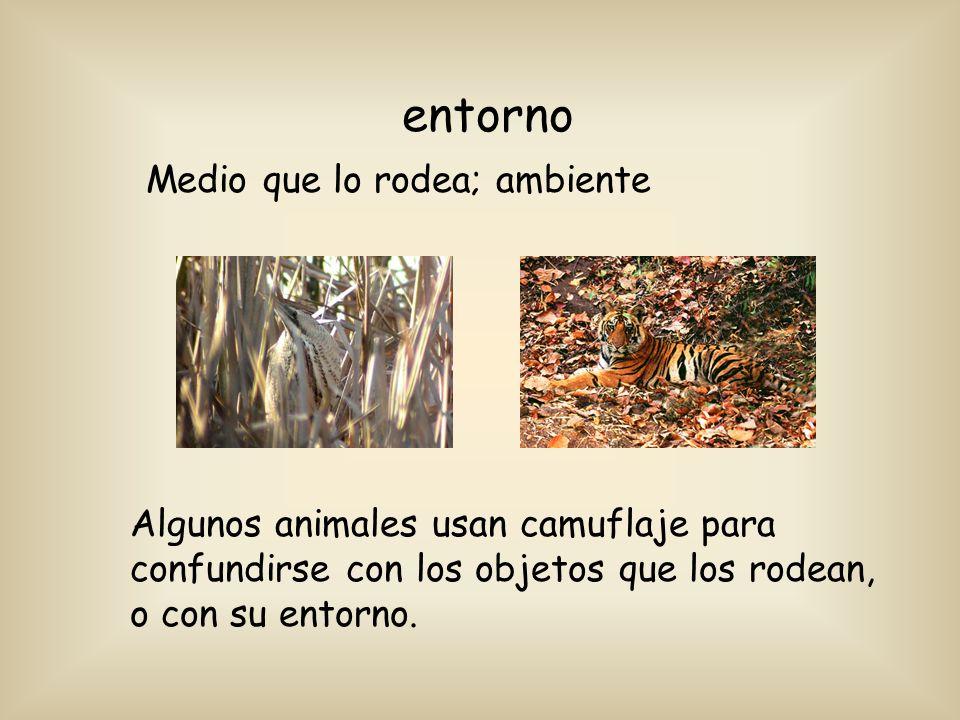 entorno Medio que lo rodea; ambiente Algunos animales usan camuflaje para confundirse con los objetos que los rodean, o con su entorno.