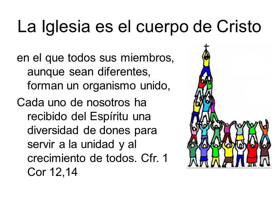 La Iglesia es el cuerpo de Cristo en el que todos sus miembros, aunque sean diferentes, forman un organismo unido, Cada uno de nosotros ha recibido de
