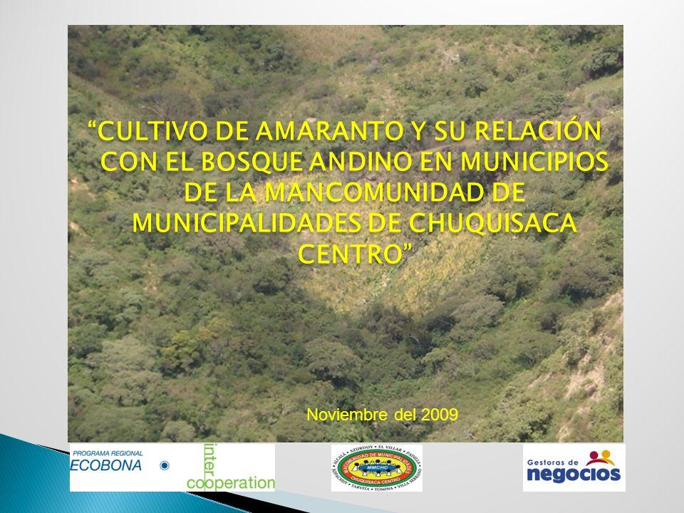 CULTIVO DE AMARANTO Y SU RELACIÓN CON EL BOSQUE ANDINO EN MUNICIPIOS DE LA MANCOMUNIDAD DE MUNICIPALIDADES DE CHUQUISACA CENTRO Noviembre del 2009