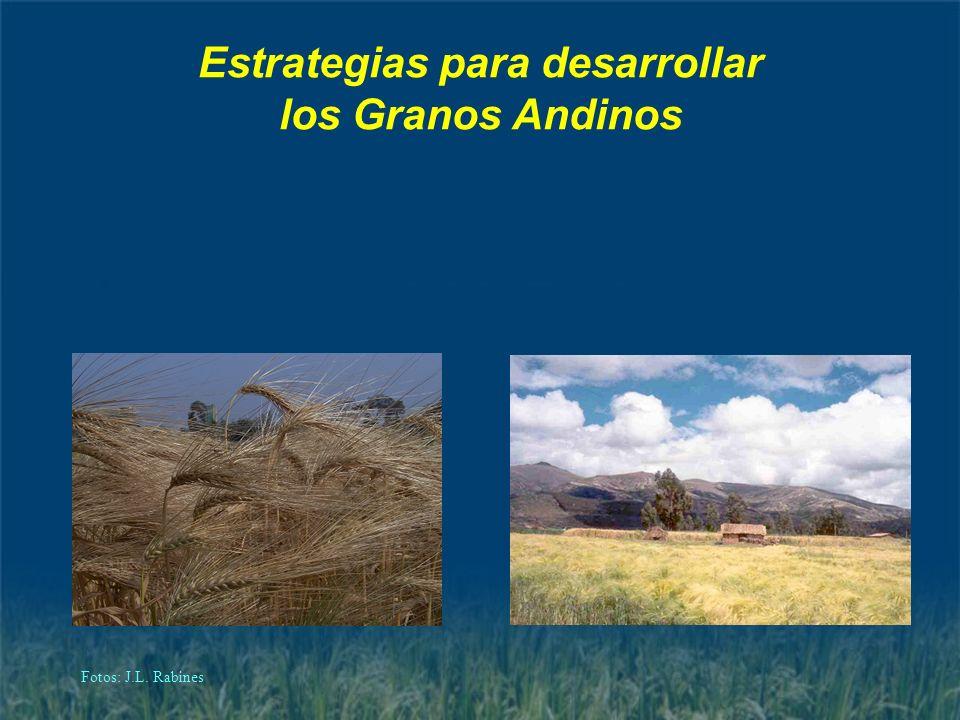 Estrategias para desarrollar los Granos Andinos Fotos: J.L. Rabines