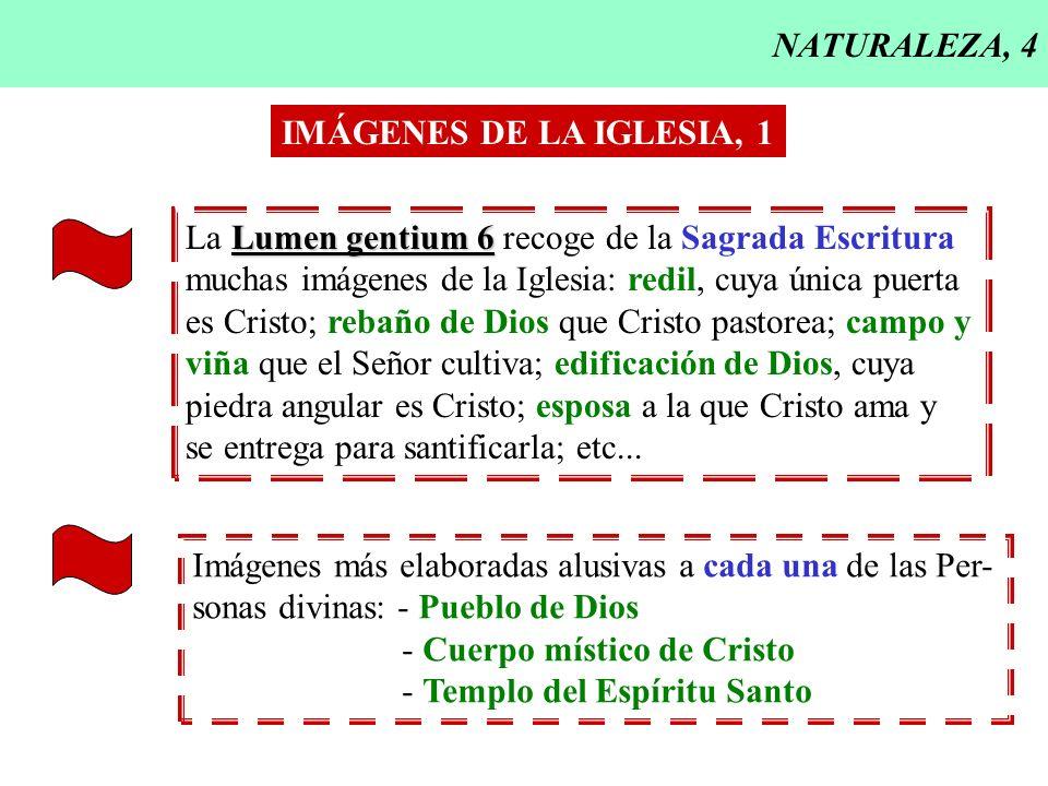 NATURALEZA, 4 Lumen gentium 6 La Lumen gentium 6 recoge de la Sagrada Escritura muchas imágenes de la Iglesia: redil, cuya única puerta es Cristo; reb