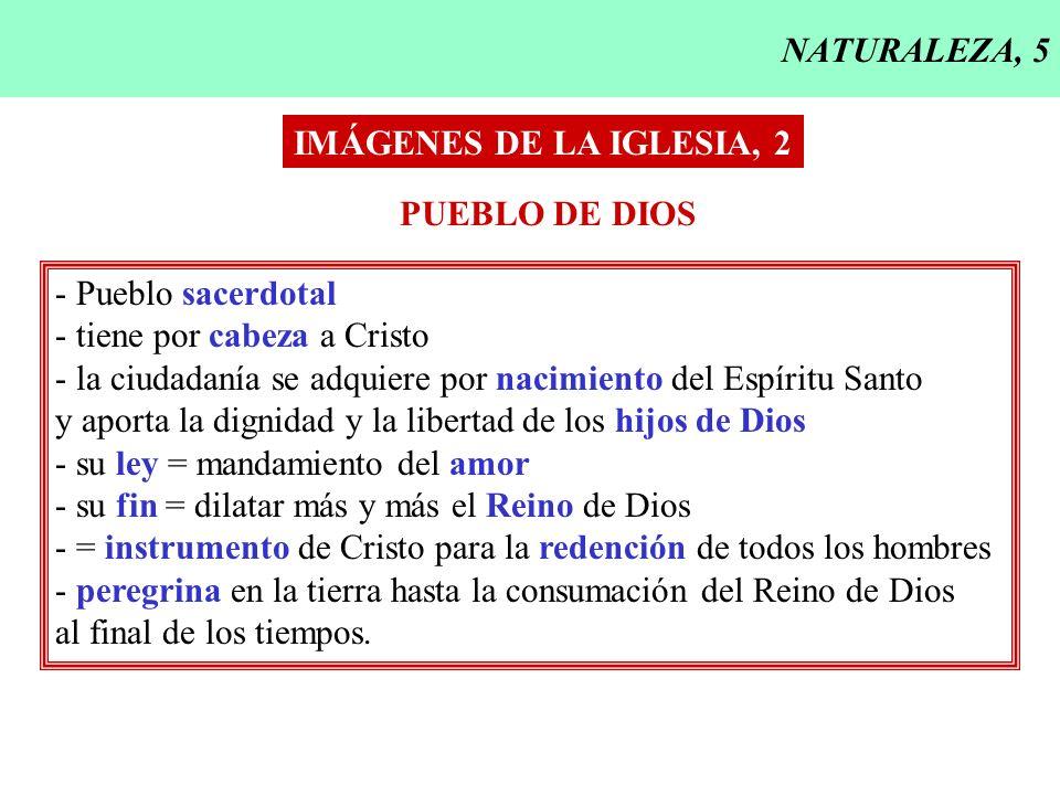 NATURALEZA, 5 IMÁGENES DE LA IGLESIA, 2 PUEBLO DE DIOS - Pueblo sacerdotal - tiene por cabeza a Cristo - la ciudadanía se adquiere por nacimiento del