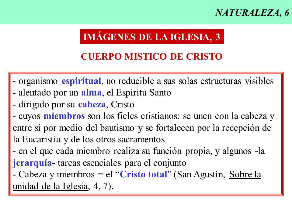 NATURALEZA, 6 IMÁGENES DE LA IGLESIA, 3 CUERPO MISTICO DE CRISTO - organismo espiritual, no reducible a sus solas estructuras visibles - alentado por