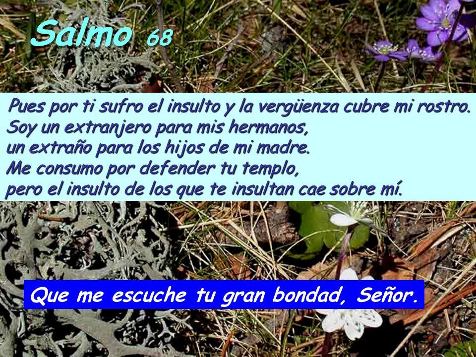 Salmo 68 Pues por ti sufro el insulto y la vergüenza cubre mi rostro.