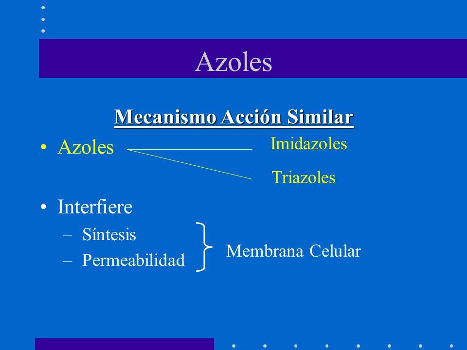 Azoles Mecanismo Acción Similar Azoles Interfiere – Síntesis – Permeabilidad Imidazoles Triazoles Membrana Celular