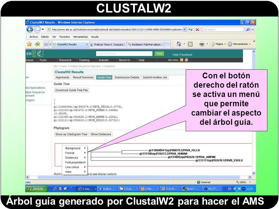 CLUSTALW2 Árbol guía generado por ClustalW2 para hacer el AMS Con el botón derecho del ratón se activa un menú que permite cambiar el aspecto del árbo