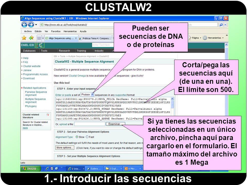 CLUSTALW2 1.- Introducir las secuencias Pueden ser secuencias de DNA o de proteínas Corta/pega las secuencias aquí (de una en una). El límite son 500.