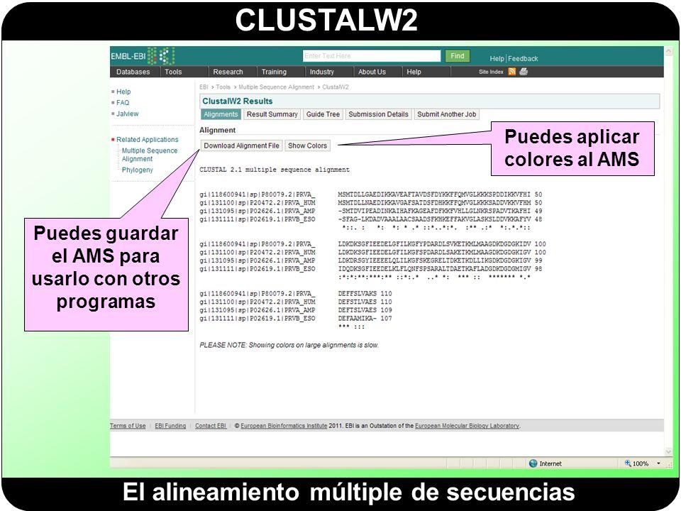 CLUSTALW2 El alineamiento múltiple de secuencias Puedes guardar el AMS para usarlo con otros programas Puedes aplicar colores al AMS