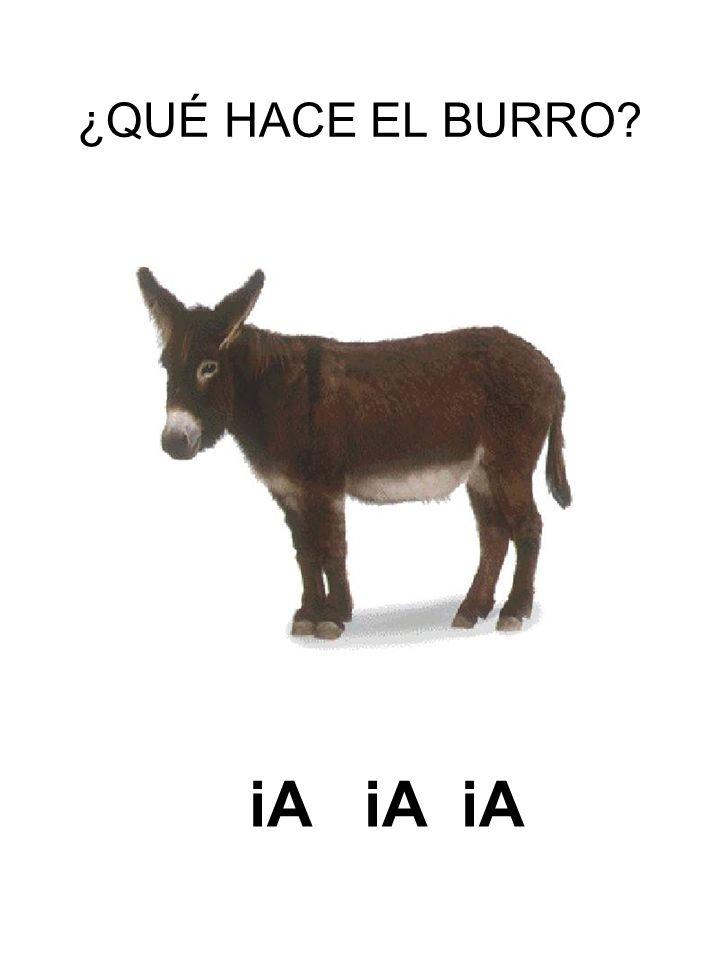 ¿QUÉ HACE EL BURRO iA iA iA