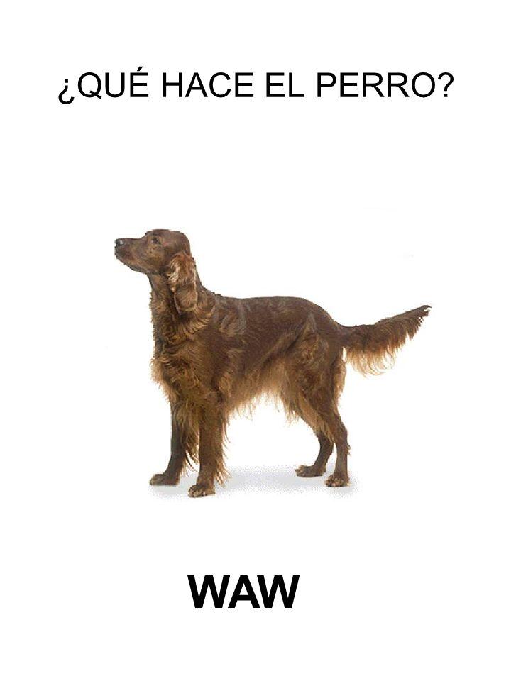 ¿QUÉ HACE EL PERRO WAW
